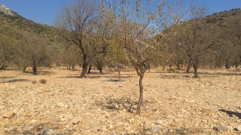 Premar Datça Yaka Köyü Yakamar Mevkiinde 1.908 M2 Yatırımlık Bademlik