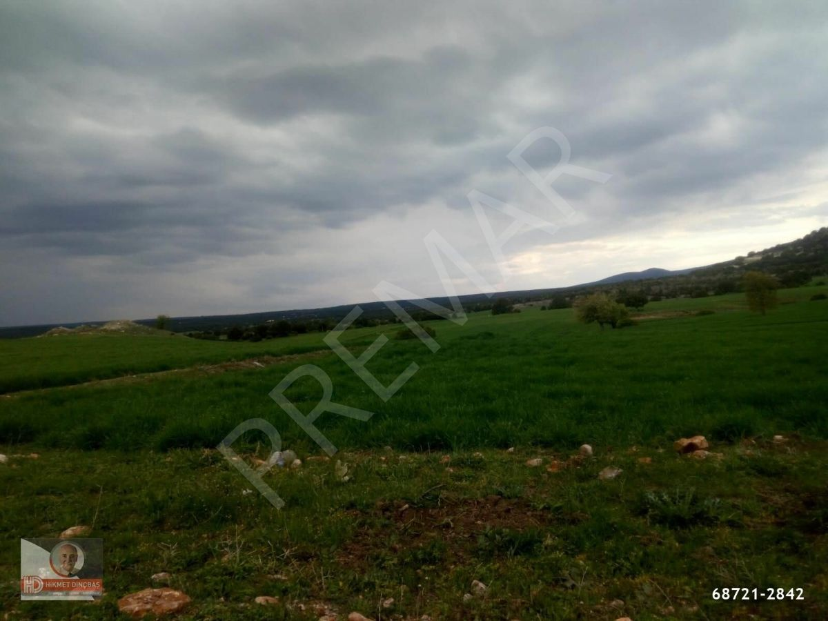 Beylikova Aşağıdudaşda Buğday Ekili Acil Satılık Tarla 150.000
