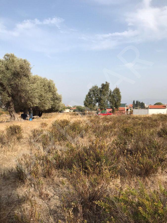 Mordoğan Merkez Çatalkaya Köyü Altında Satılık Arsa