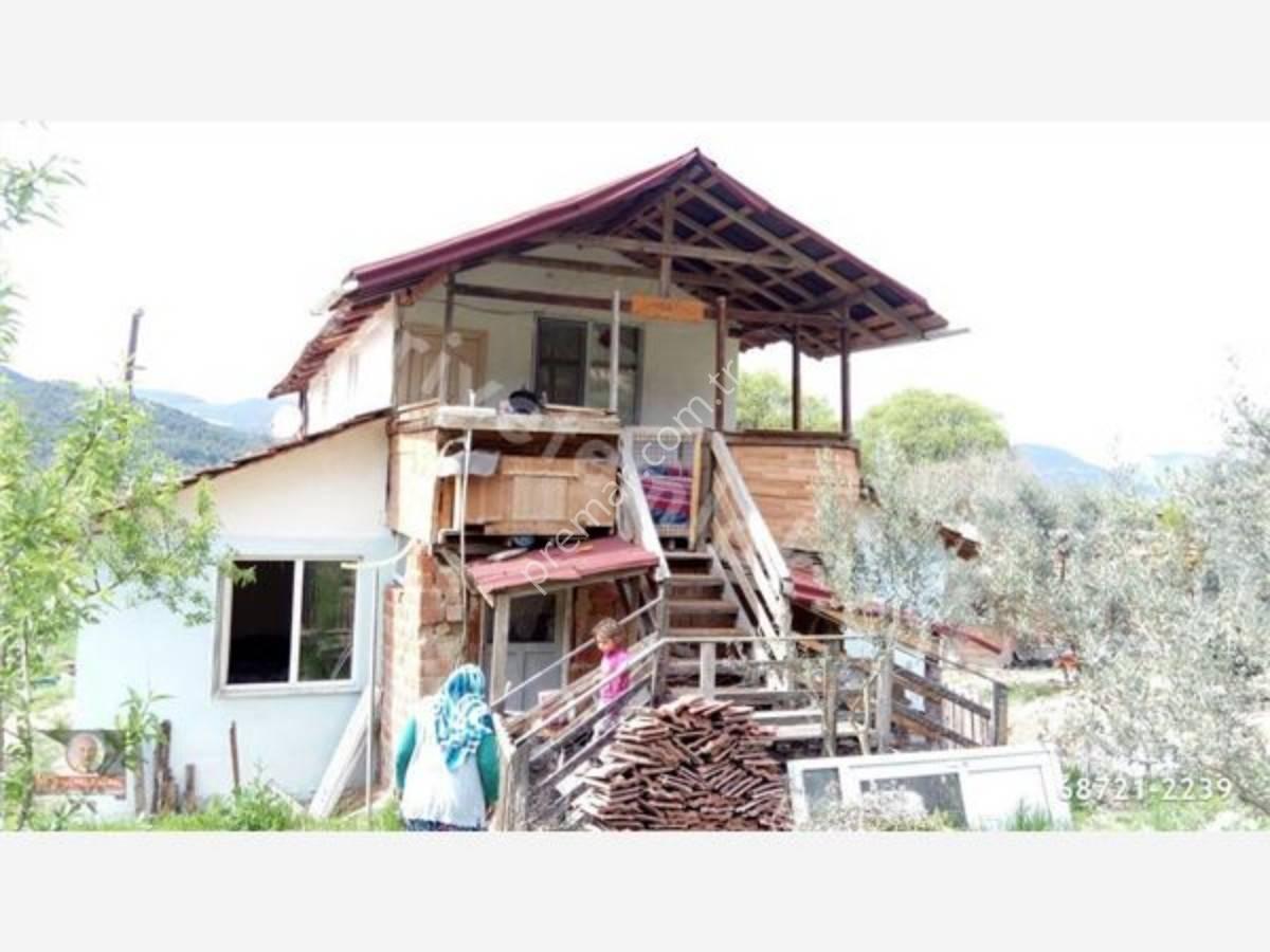Bilecik Gölpazarı Küçük Yenicede Satılık Zeytinlik Ve Ev