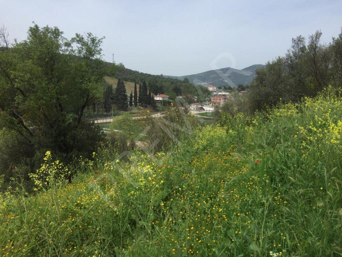 Dereköy'de Ana Yola Yakın Yatırım İçin İdeal Zeytinlik